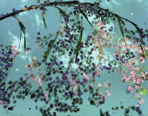 Dorothy Bougainvillea Aquatic Tableau#20